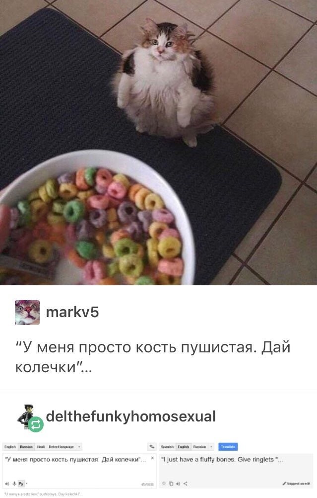 """Russian cat translation meme with picture of cat looking at bowl of fruit loops and Russian text that translates to """"I just have fluffy bones, give ringlets"""""""