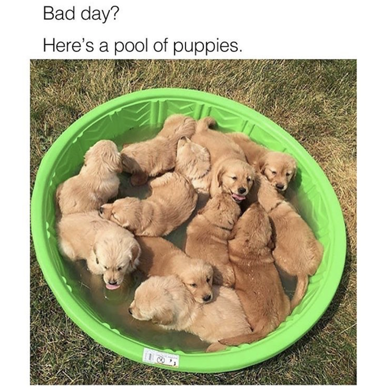 "Caption that reads, ""Bad day? Here's a pool of puppies"" above a pic of a bunch of golden retriever puppies swimming in a little backyward pool"