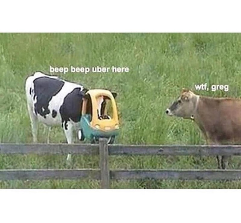 stupid memes of cow stuck in a children's toy
