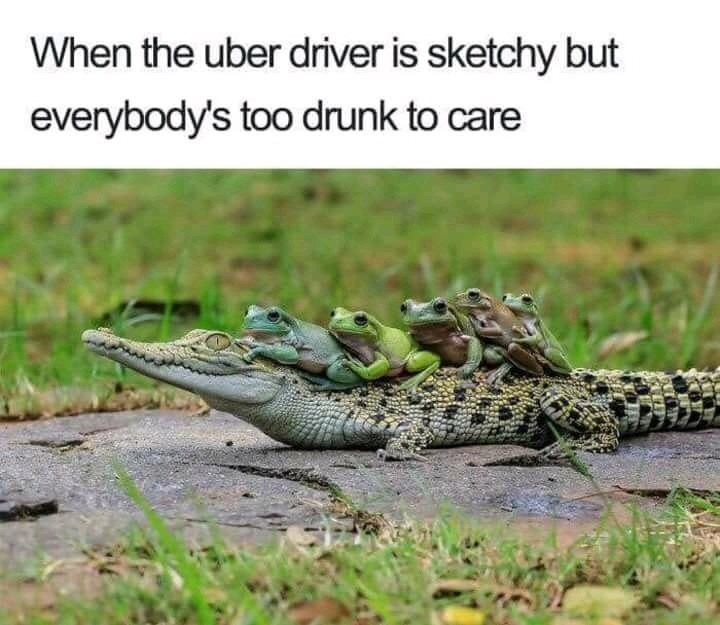 Uber meme with picture of sketchy driver crocodile ridden by drunk frogs
