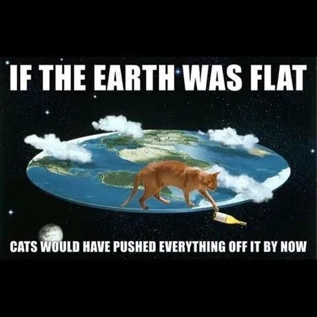 Cats funny earth - 9232345088