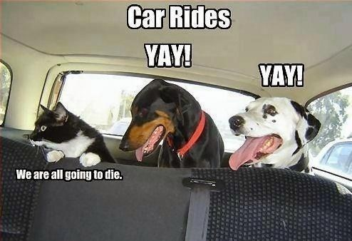 Hilarious Cat vs Dog Meme - Dog Meme about how Dogs love car rides and cats hate it
