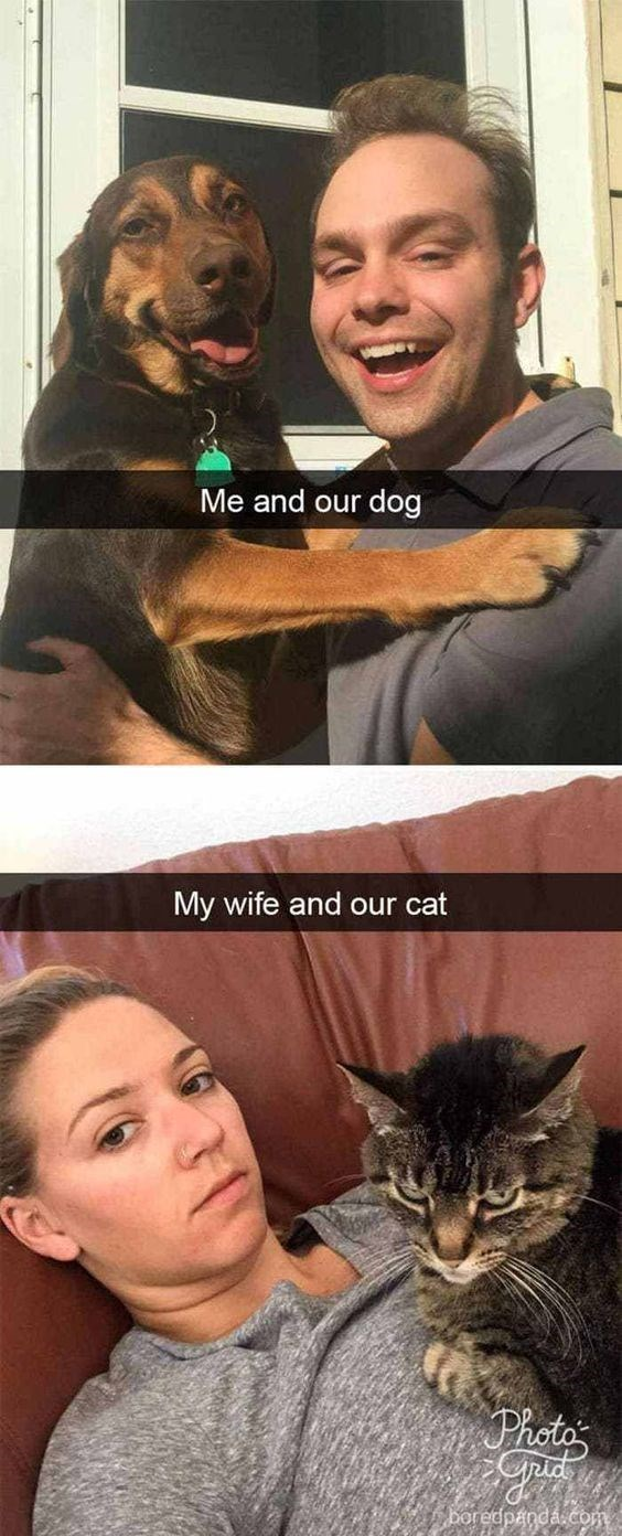 Dog meme of a dog that is smiling with the husband and the cat that looks mad with the wife