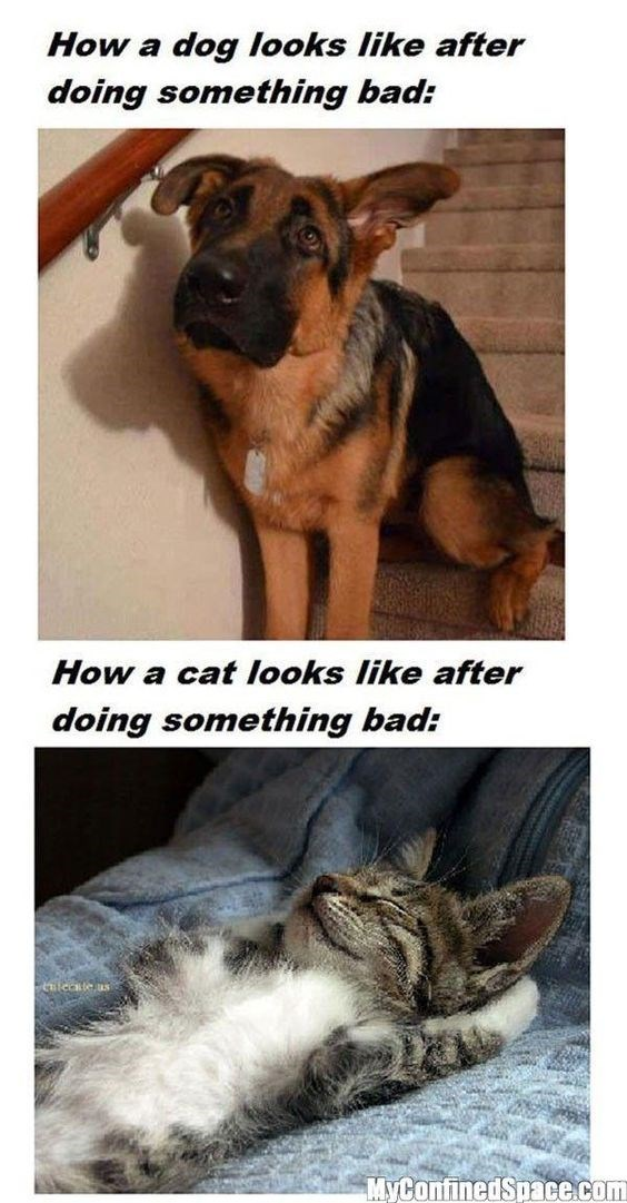 dog meme about how dogs feel guilty after doing something bad and cats don't