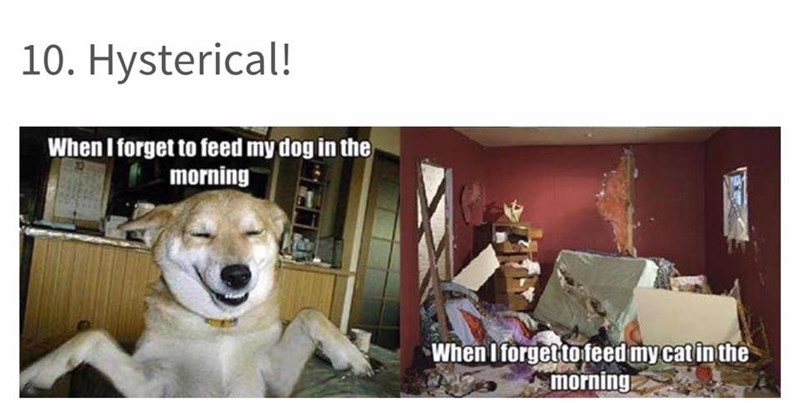 dog meme about how dogs are calm if you forget to feed them and cats freak out