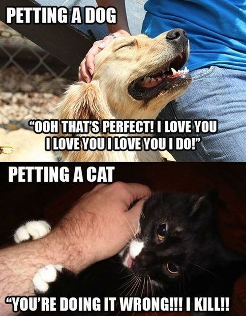 dog meme about how dogs love any kind of petting vs cats that like it a specific way