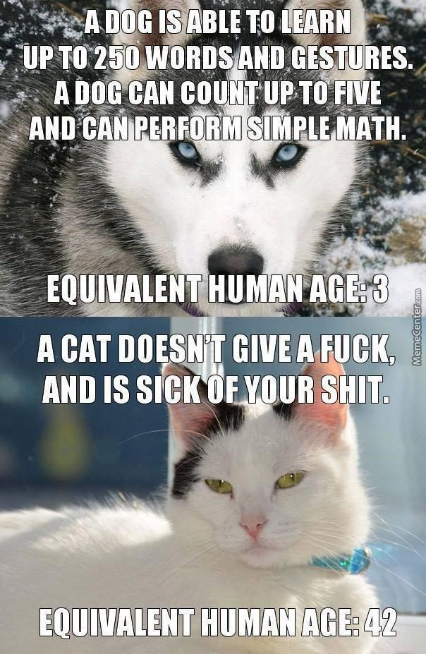 dog meme about a dogs age in human years versus a cat