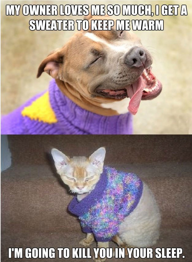dog meme about how dogs are appreciative versus cats who are not