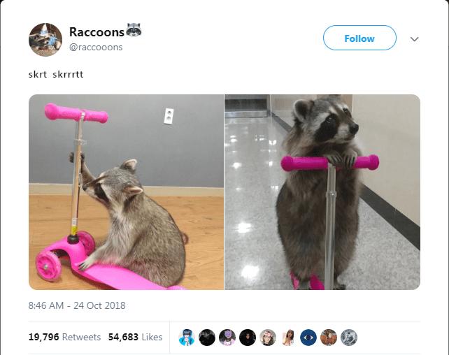 Carnivore - Raccoons Follow @raccooons skrt skrrrtt 8:46 AM 24 Oct 2018 19,796 Retweets 54,683 Likes