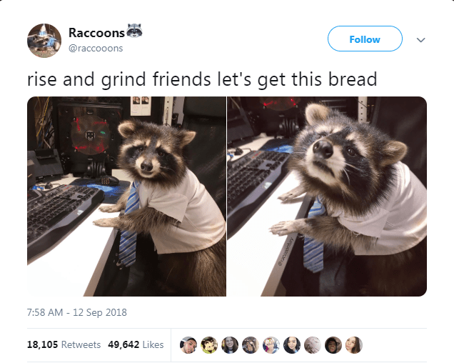 Photo caption - Raccoons Follow @raccooons rise and grind friends let's get this bread 7:58 AM 12 Sep 2018 18,105 Retweets 49,642 Likes