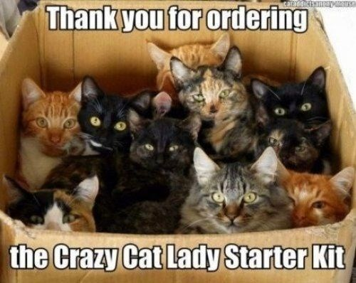 caturday meme about becoming a crazy cat lady