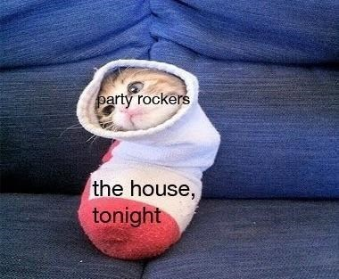 caturday meme about party rockers in the house tonight with a kitten inside a sock