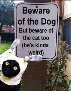caturday meme with a sign warning of the weird cat
