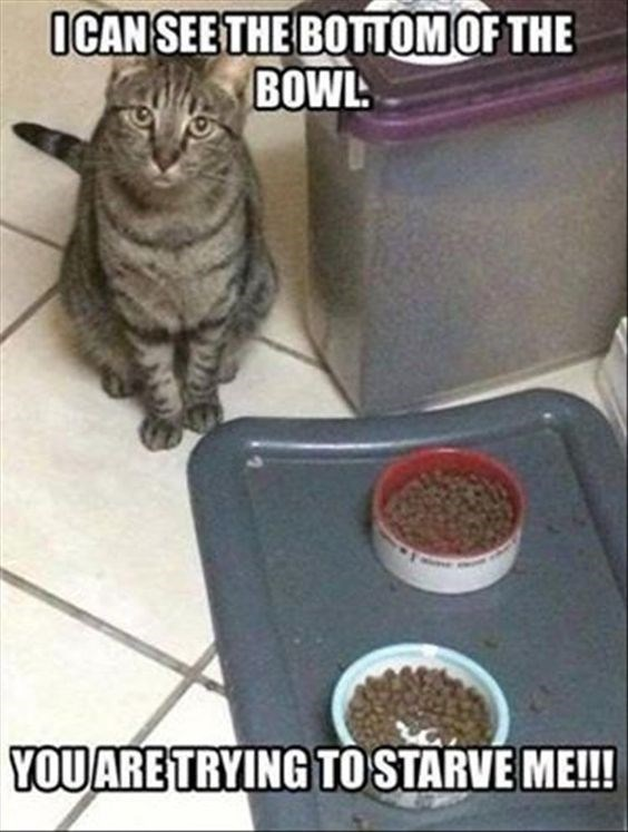 caturday meme about a cat wanting his food bowl to be full