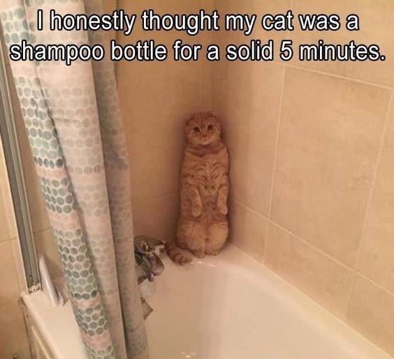 caturday meme about a cat disguising itself as a shampoo bottle
