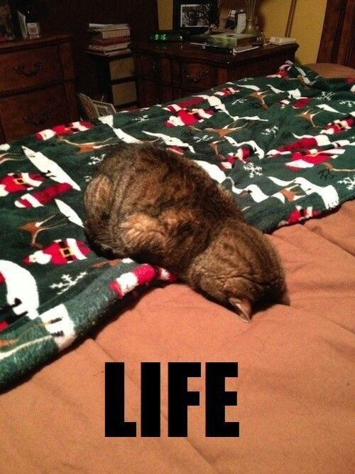 caturday meme about handling life with a cat laying face down