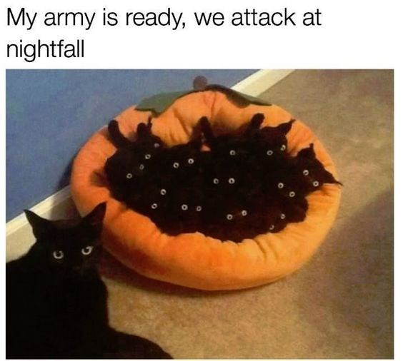 caturday meme with pic of bed filled with black kittens