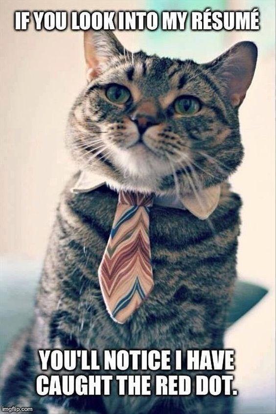 caturday meme about a qualified cat
