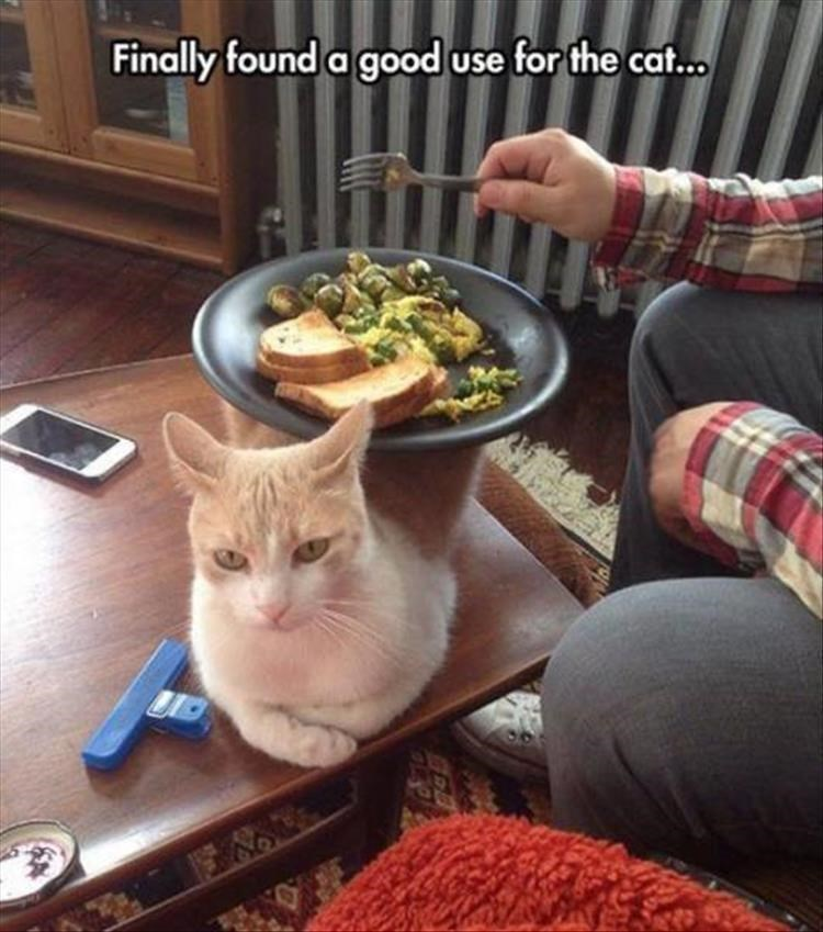 caturday meme about using the cat as a food tray
