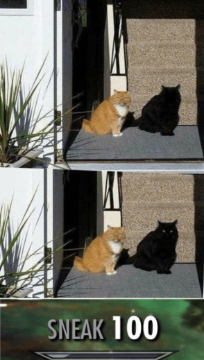 caturday meme about a cat maxing his sneak skill to look like a shadow