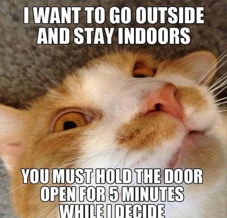 caturday meme about cats being indecisive about going in or out