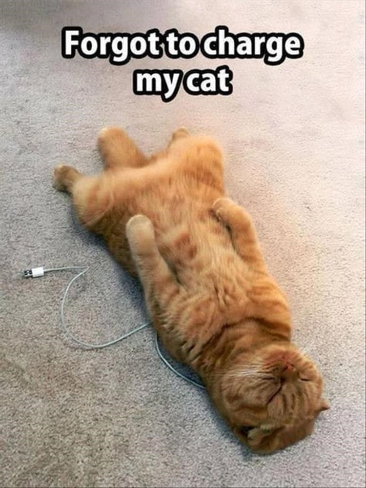 caturday meme about a cat running out of battery
