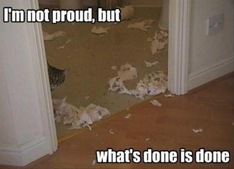 caturday meme about a cat hiding after shredding a room