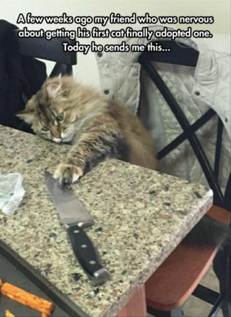 caturday meme of a cat playing with a kitchen knife