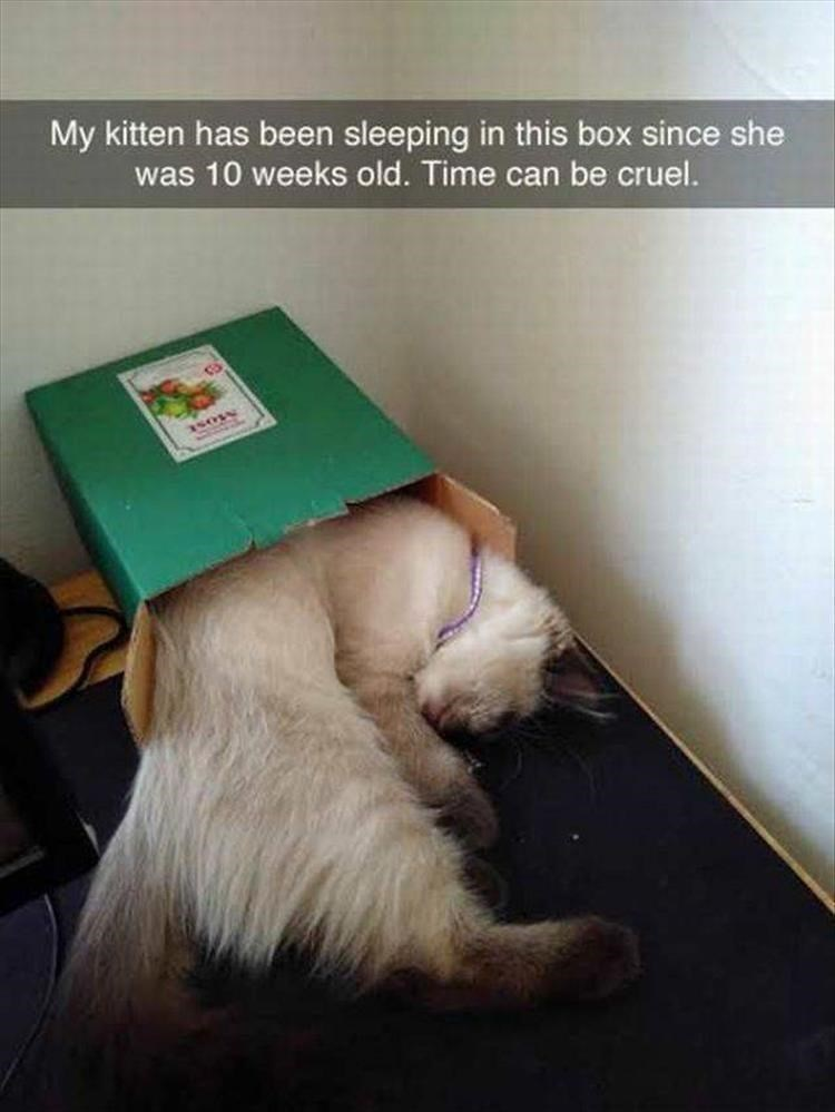 caturday meme with snapchat of a cat who grew too big for its box