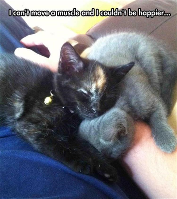 caturday meme about not wanting to wake sleeping kittens