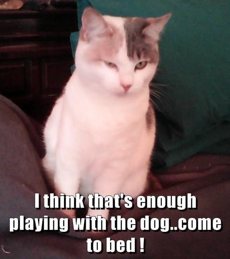 caturday meme about a jealous cat