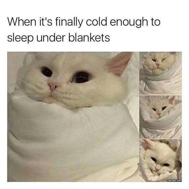 caturday meme about sleeping with blankets