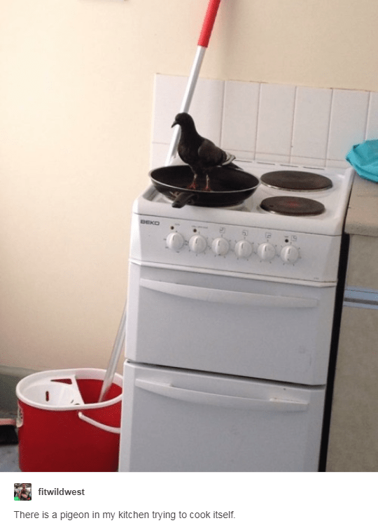 Room - BEKO fitwildwest There is a pigeon in my kitchen trying to cook itself.