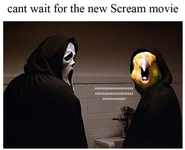 screaming bird meme about waiting for the new Scream movie