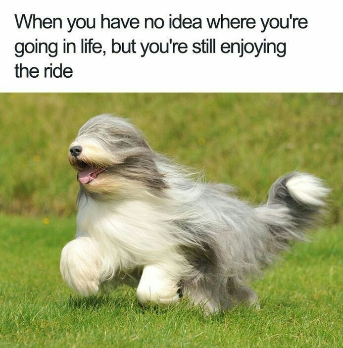 meme about not knowing where you're going in life but still enjoying the ride with picture of dog running with fur in its eyes