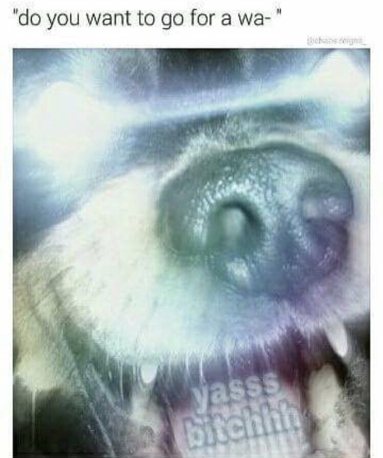 "meme about dogs being excited to go for walks with picture of dog with glowing eyes and caption saying ""yes bitch"""