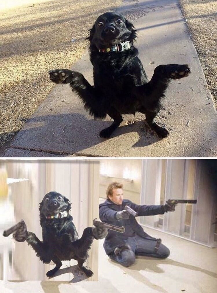 picture of dog standing on hind legs photoshopped into scene from Boondock Saints