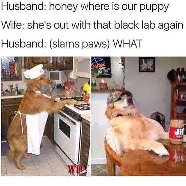meme about racist dog parents with pictures of Labrador dogs cooking in kitchen and sitting at table
