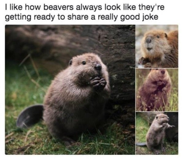 Mammal - like how beavers always look like they're getting ready to share a really good joke