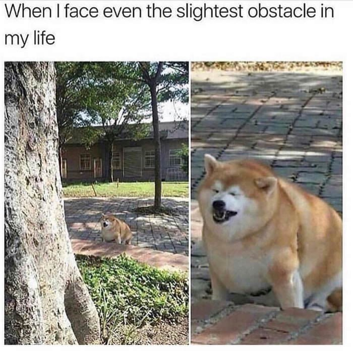 "Caption that reads, ""When I face even the slightest obstacle in my life"" above a pic of a fat shiba inu making a pained facial expression"