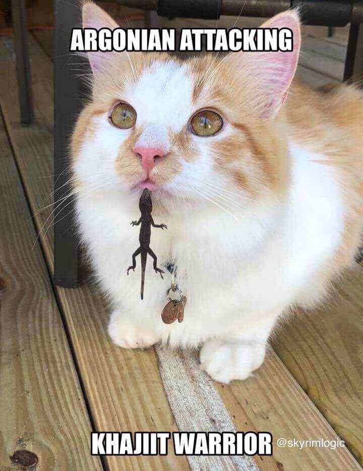 cat meme showing a small lizard attacking a khajit warrior cat