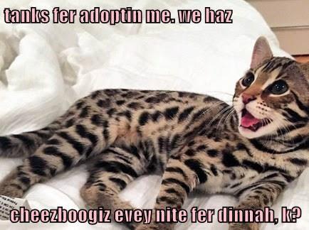 cat meme - Cat - tanks fer adoptin me. we haz cheezboogiz eveynite fer dinnai, It?
