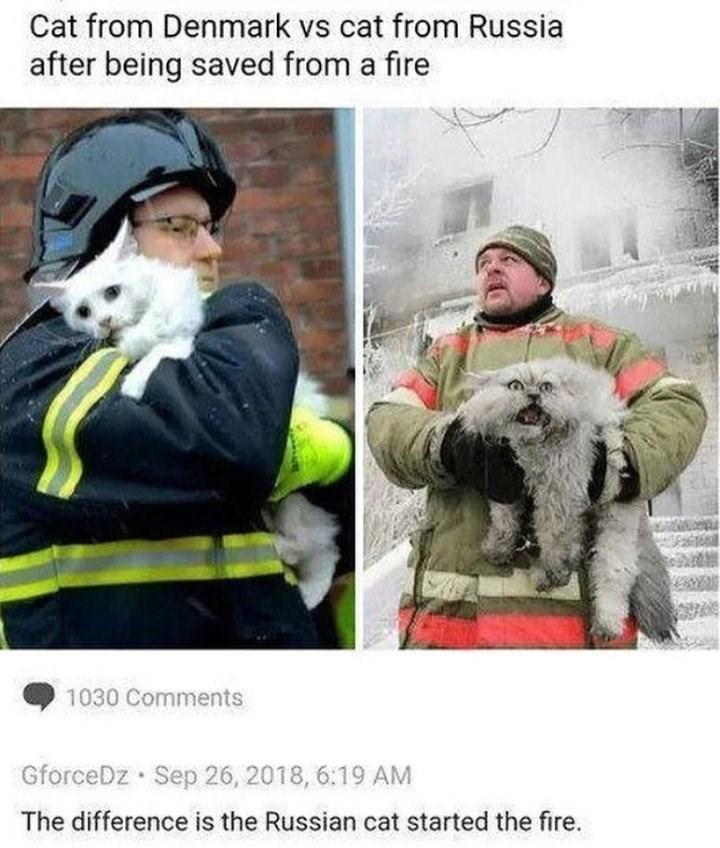 russia Memes Cats funny - 9233470464