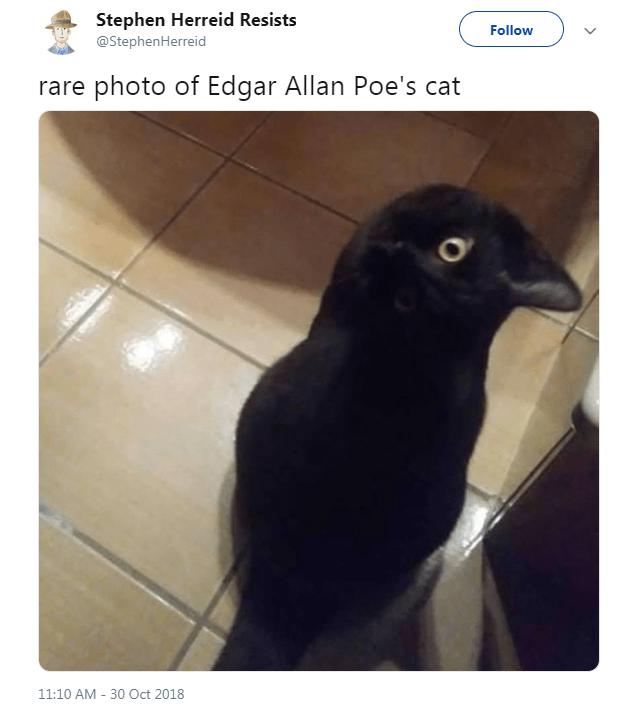 Bird - Stephen Herreid Resists @StephenHerreid Follow rare photo of Edgar Allan Poe's cat 11:10 AM 30 Oct 2018