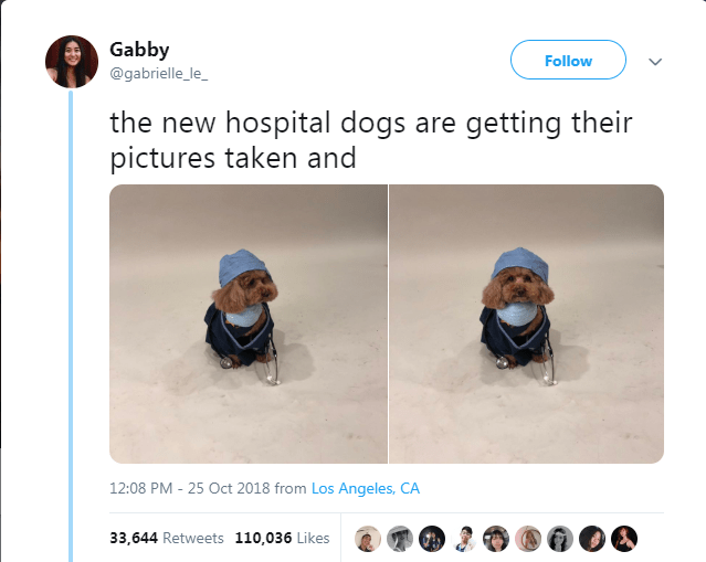Text - Gabby Follow @gabrielle_le_ the new hospital dogs are getting their pictures taken and 12:08 PM - 25 Oct 2018 from Los Angeles, CA 33,644 Retweets 110,036 Likes