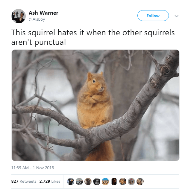 Squirrel - Ash Warner Follow @AlsBoy This squirrel hates it when the other squirrels aren't punctual 11:39 AM - 1 Nov 2018 827 Retweets 2,729 Likes