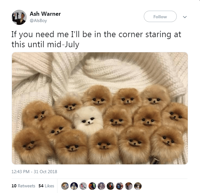 Pomeranian - Ash Warner Follow @Als Boy If you need me I'll be in the corner staring at this until mid-July 12:43 PM 31 Oct 2018 10 Retweets 54 Likes