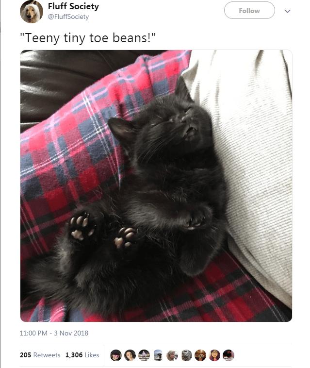 """Cat - Fluff Society Follow @FluffSociety """"Teeny tiny toe beans!"""" 11:00 PM 3 Nov 2018 205 Retweets 1,306 Likes"""