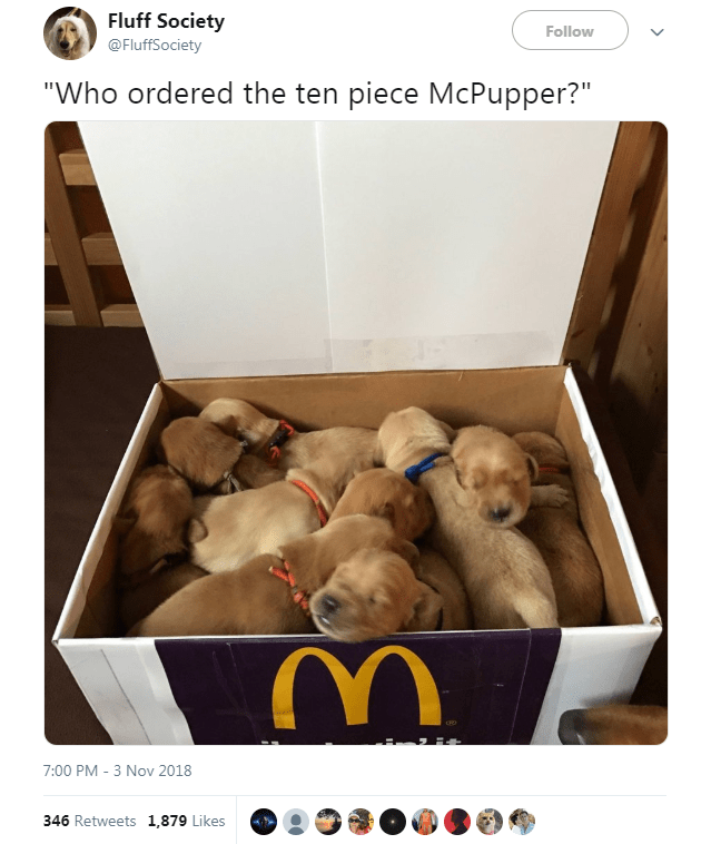 """Dog - Fluff Society Follow @FluffSociety """"Who ordered the ten piece McPupper?"""" 7:00 PM -3 Nov 2018 346 Retweets 1,879 Likes"""
