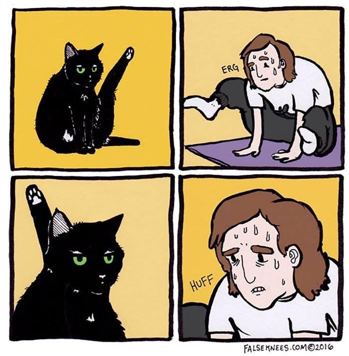 cat yoga comic Cats funny yoga web comics - 9233616128